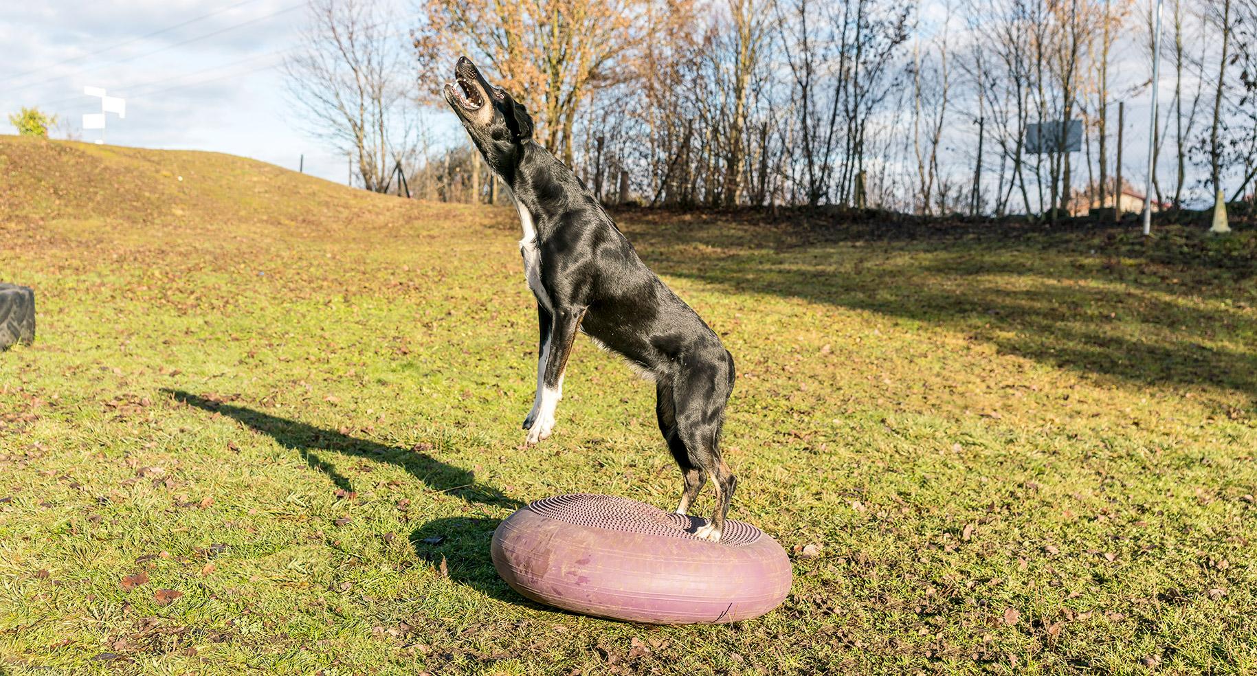 DogFitNess Fitnesstraining für Hunde
