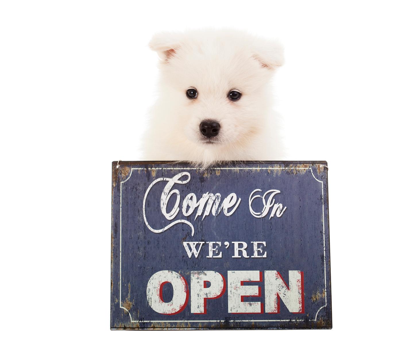 HundeSinn Onlineshop